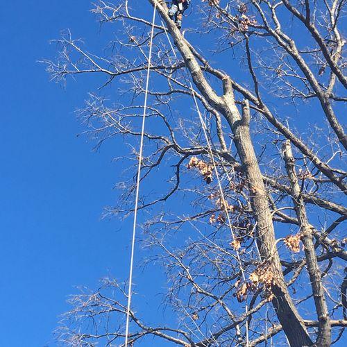 Nashville, TN Tree Removal