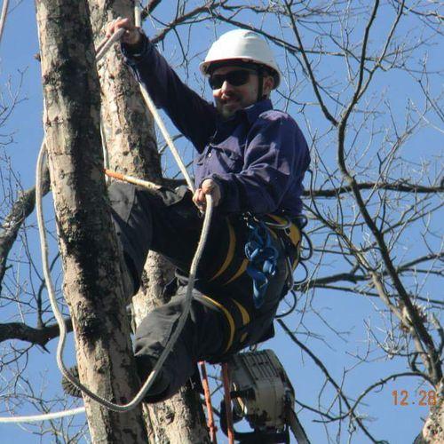 Nashville, Tree Service