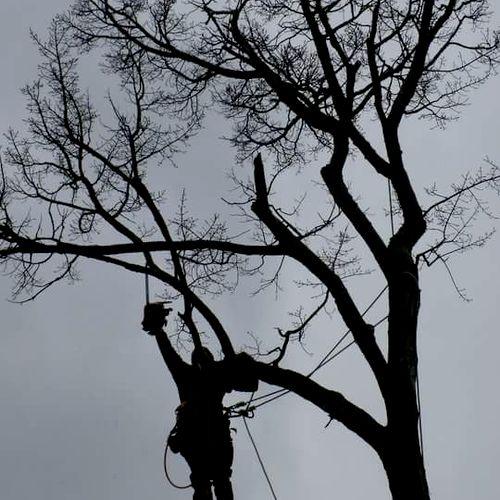 ArborJack's Tree Service Nashville, TN