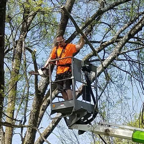 Nashville, TN Tree Removal Service