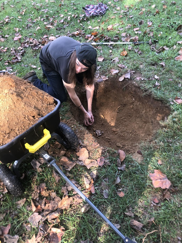 Planting Dogwood and Magnolia Trees