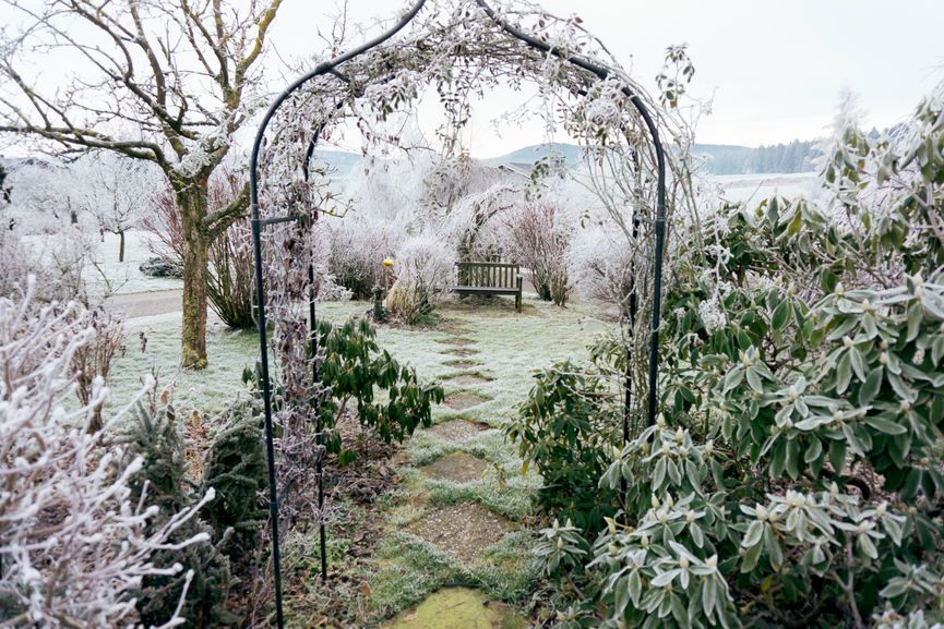 frosted yard plants trees