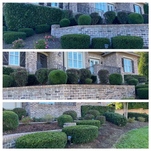 Hedgetrimming in Brentwood, TN