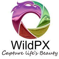 WildPx Photography