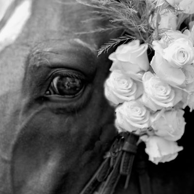 Avatar for blue pony photography