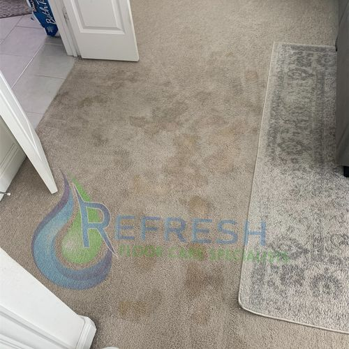 Pet stain removal Before Little Elm