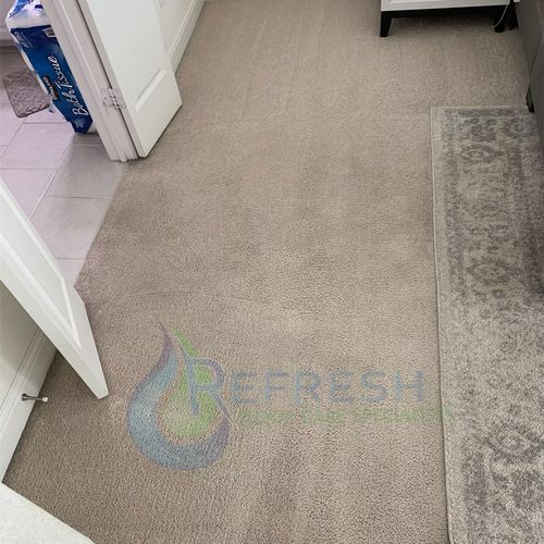 Pet stain removal after Little elm
