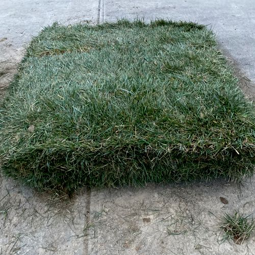 Tall Fescue Sod is what RnR landscaping provide & install