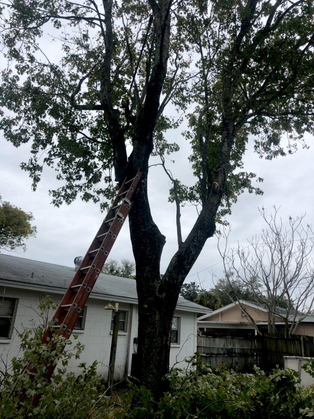 Clean Cut Tree Services LLC