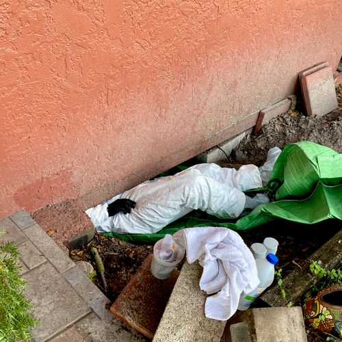 Treating Mold Growth in a Crawl Space in Tampa