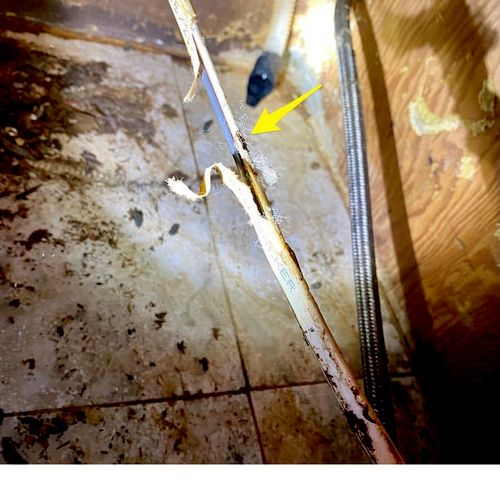 Dishwasher wire gnawed by a rat. Also ate right thru the water hose. Electricity and water do not mix well