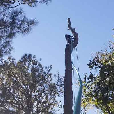 Avatar for Rico tree service