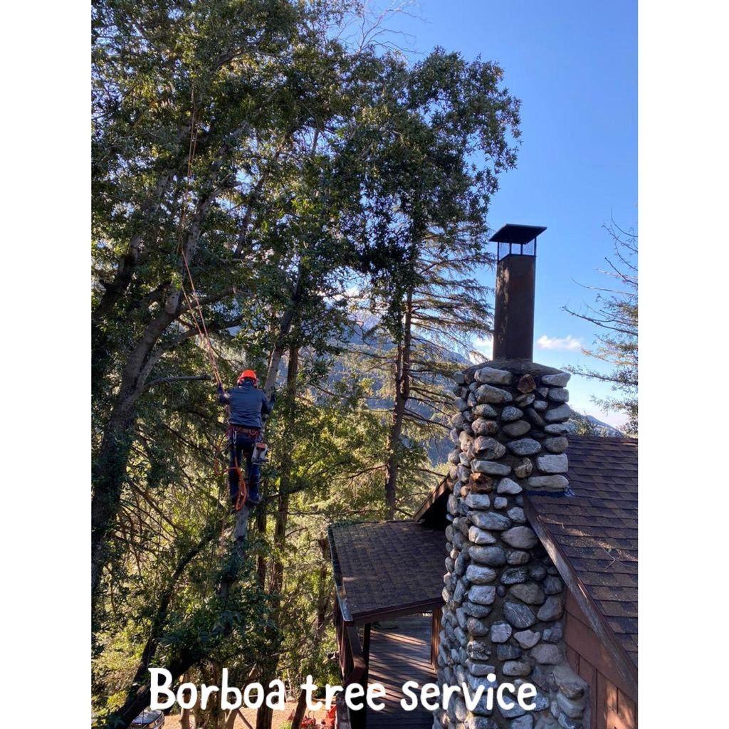 Borboa Tree Service