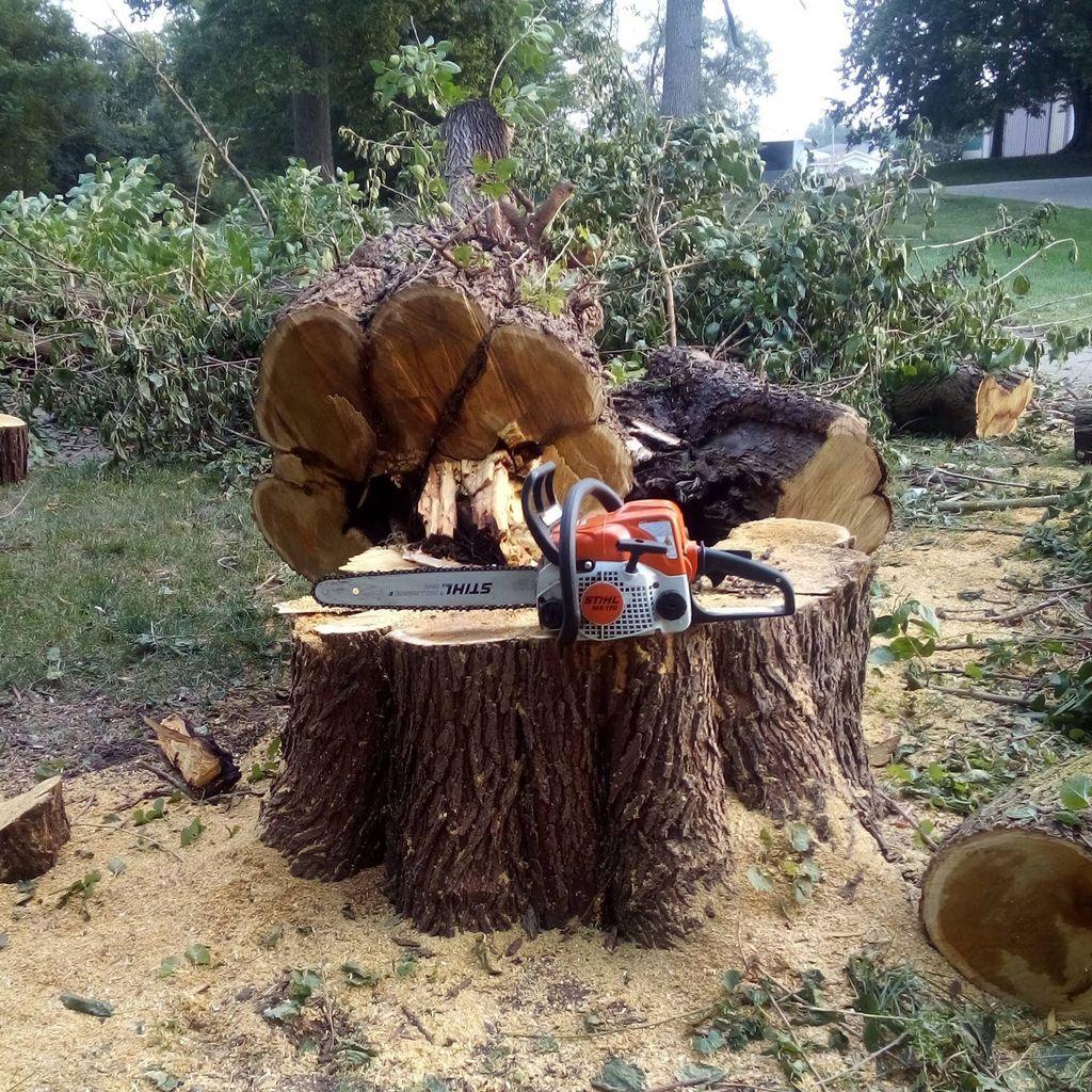 Green Harmony Tree Care
