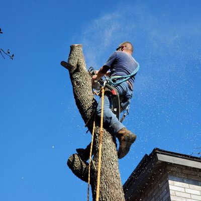 Avatar for Treewise Arborcare