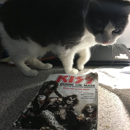 Gracie checking out my kiss book