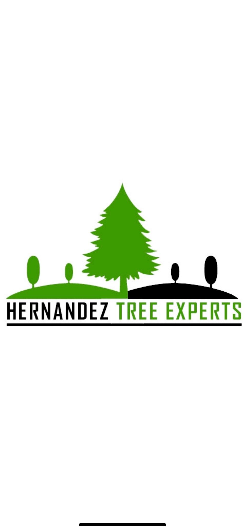 🌳Hernandez Tree Experts🌳