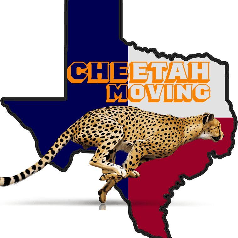 CheetahMovingDFW