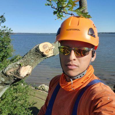 Avatar for galicia's tree expert