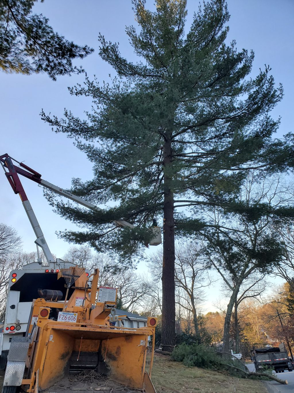 Removing a trees