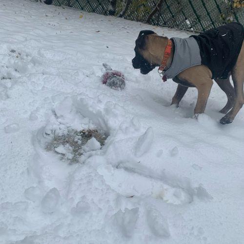 Snowy Playtime