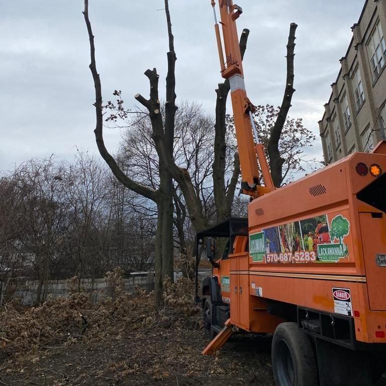 Lackawanna tree service