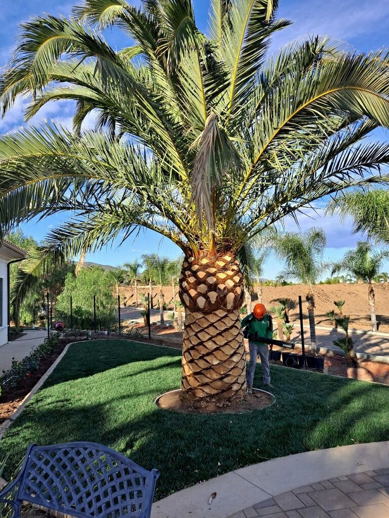 Regs Tree Services