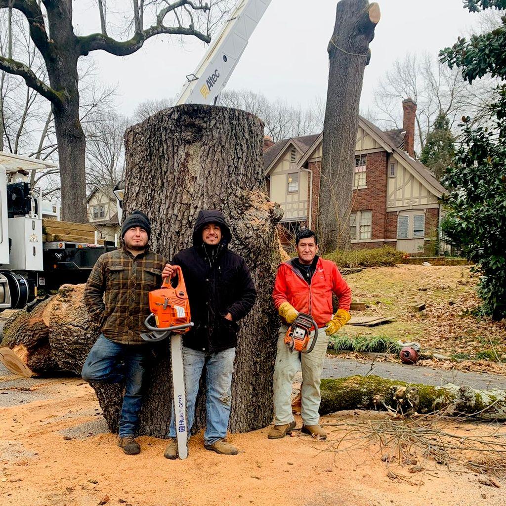 world Tree services