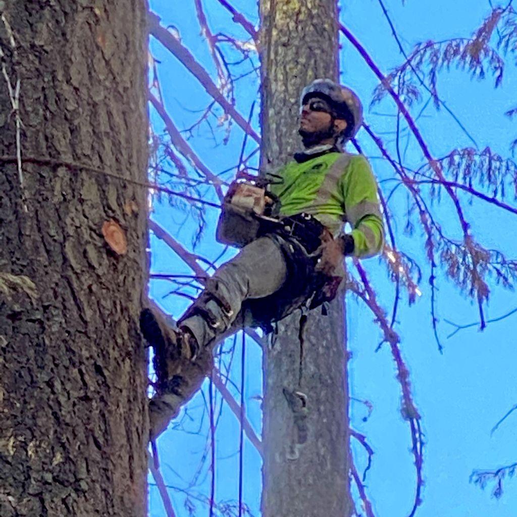 Andrade's tree service LLC