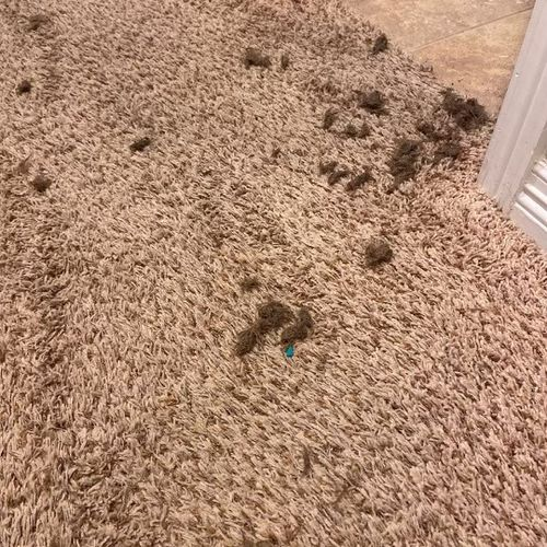 Even right after using a commerical vacuum, our power scrubber removes ground-in pet hair and debris!