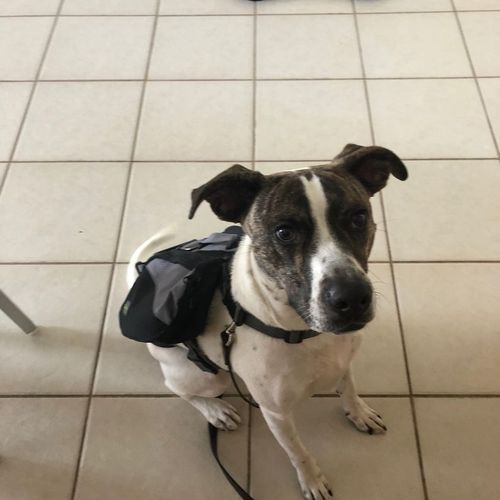 Ross is rocking his new doggie backpack. Great job!