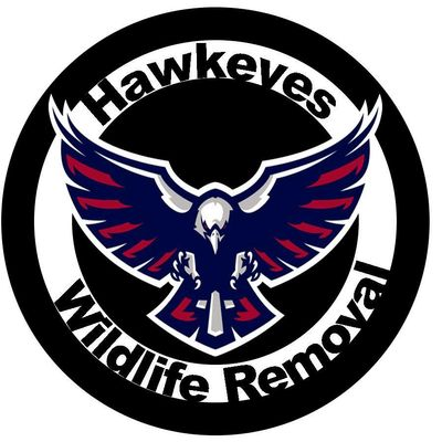 Avatar for Hawkeyes Wildlife Removal