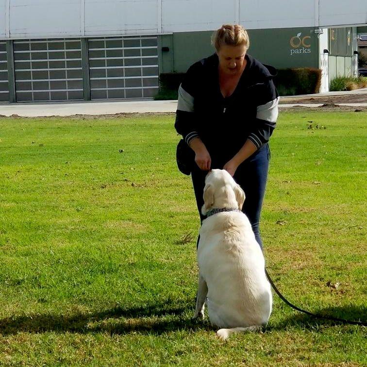 Love an Paws Dog Training