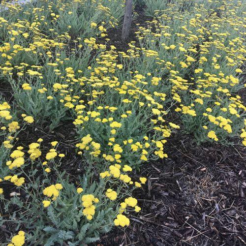 Perennial Plantings