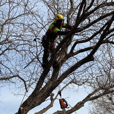 The 10 Best Tree Trimming Services In Fort Collins Co 2021