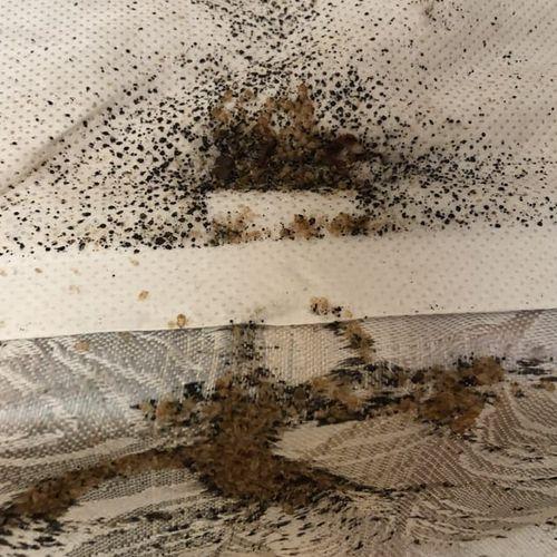 Bed Bug Fecal Matter on Mattress