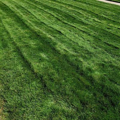 Avatar for Fresh Cuts Lawn Care, LLC