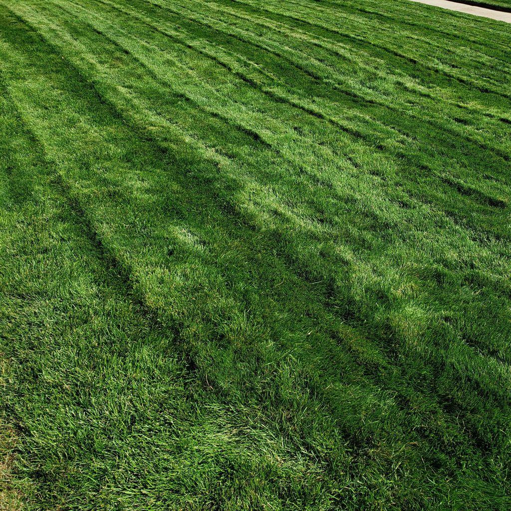 Fresh Cuts Lawn Care, LLC
