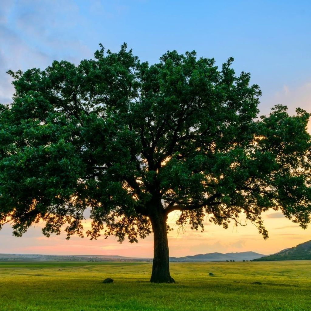 Murueta Tree Service and General Construction