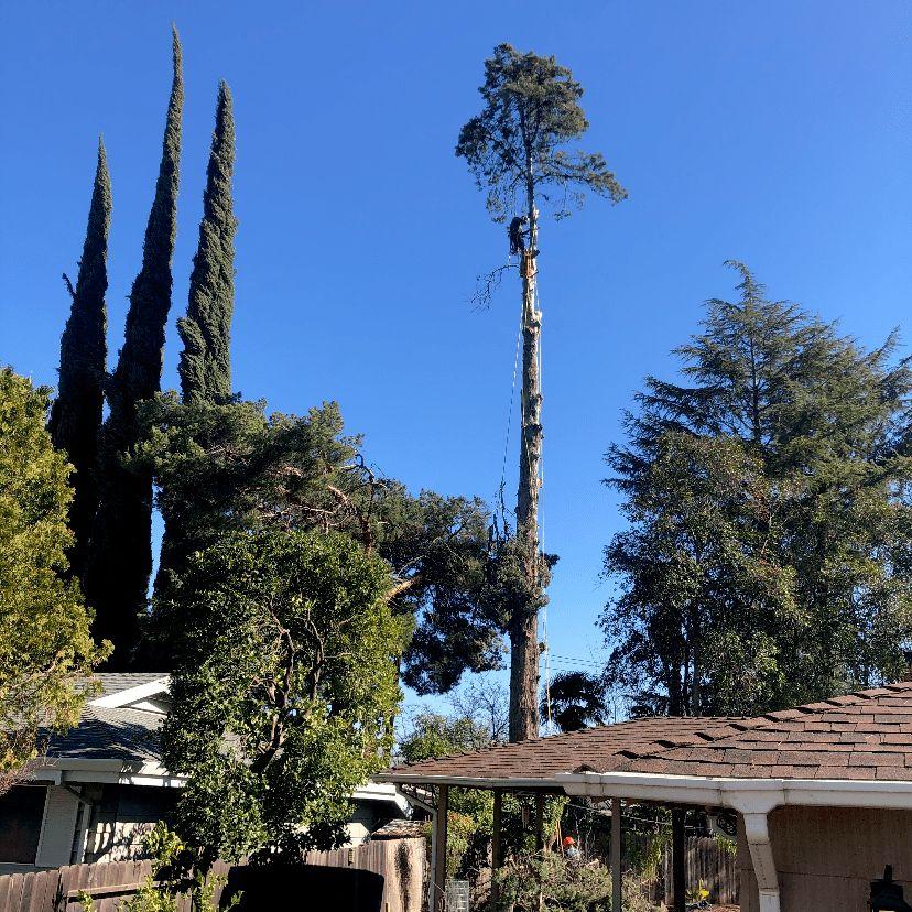 Guzman trees services