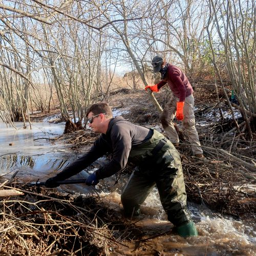 Beaver dam destruction to prevent flooding at a condo association.