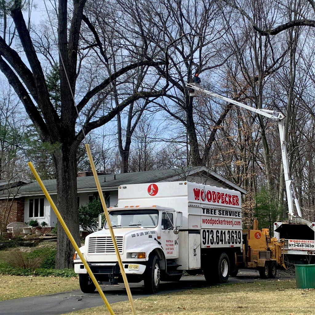 Woodpecker tree service llc