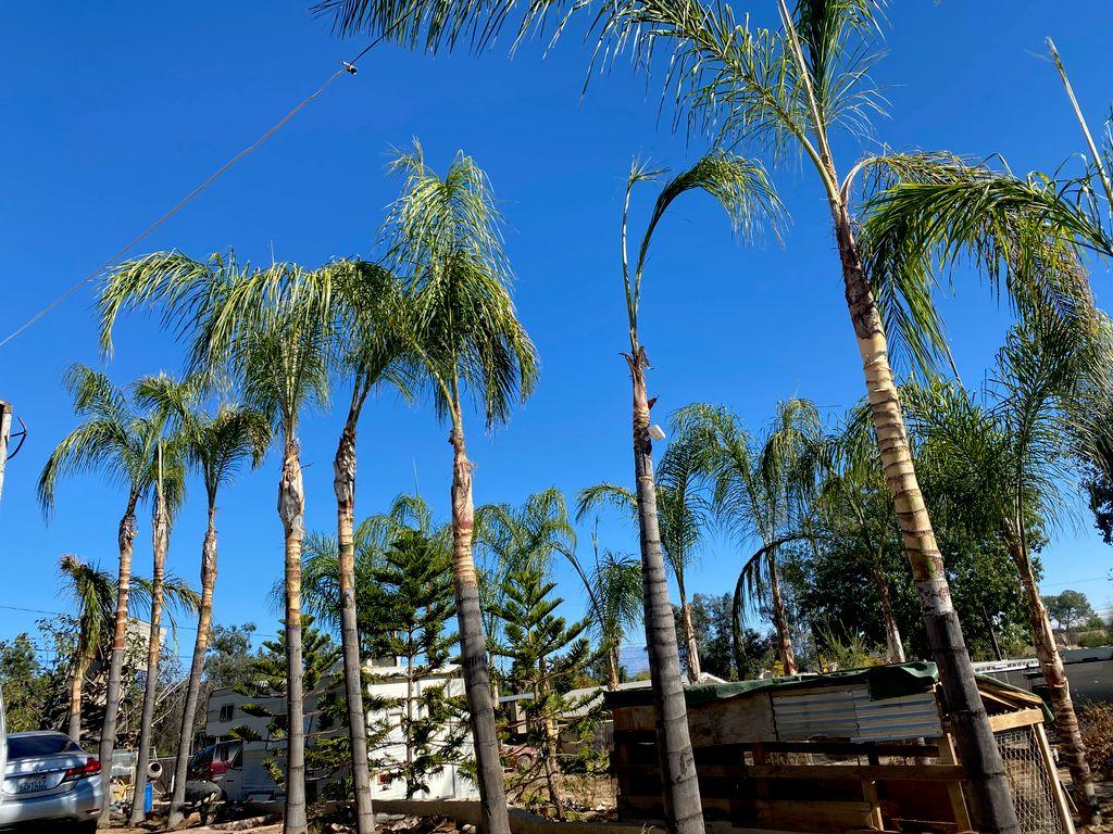 Chavez tree service