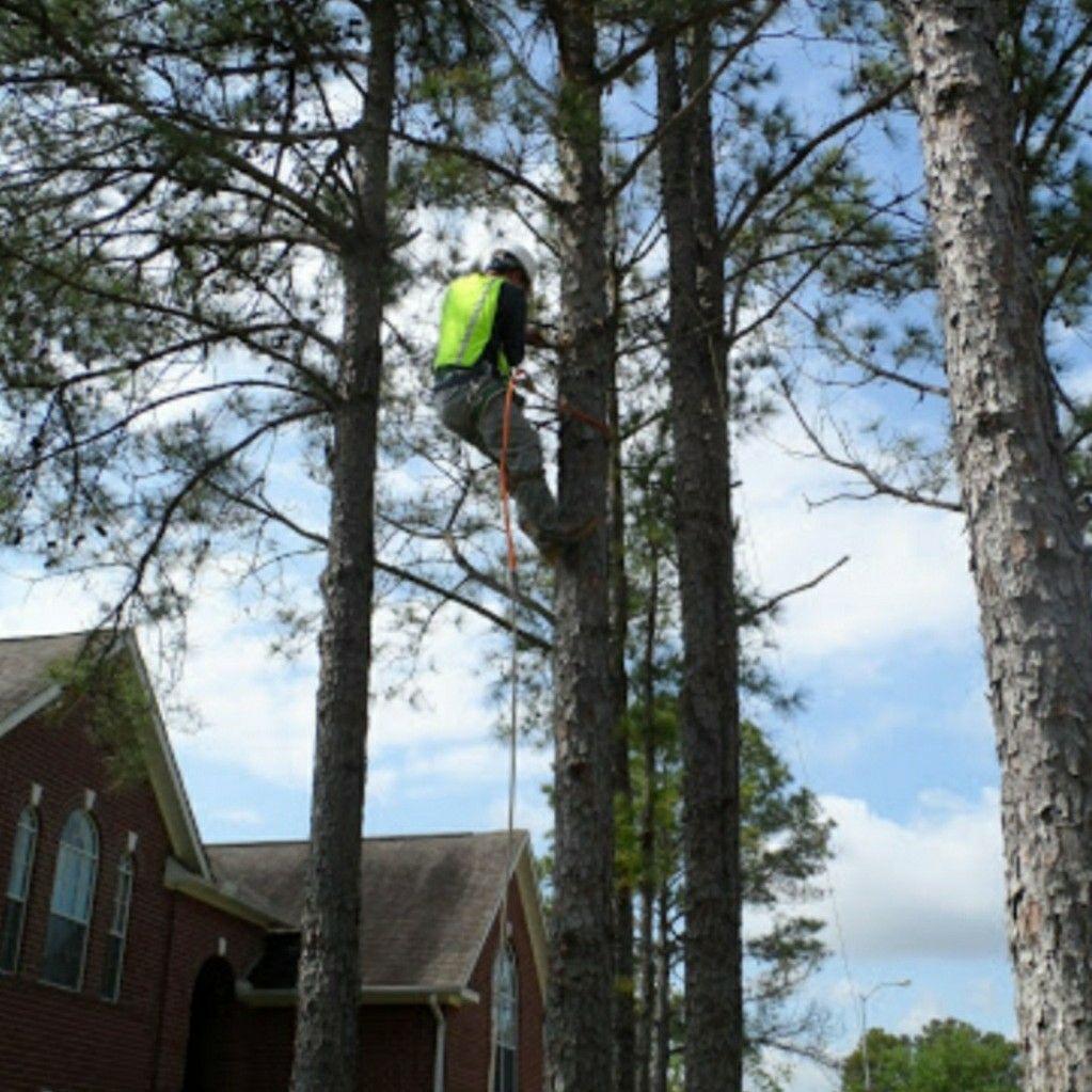 Crystal Tree Service