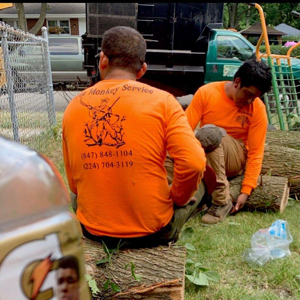 Tree Monkey Service