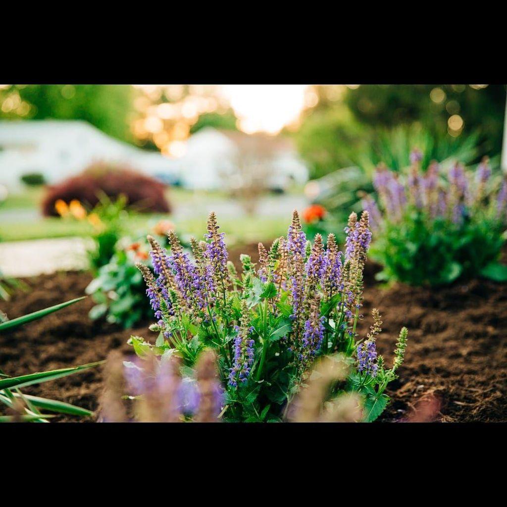Custom Gardening Services