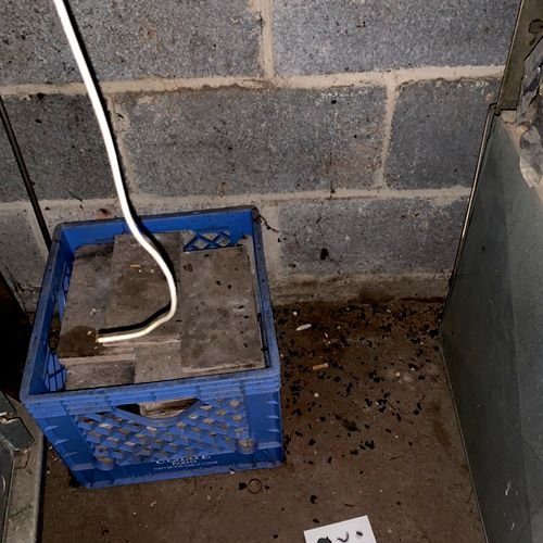 Rat Mess behind furnace