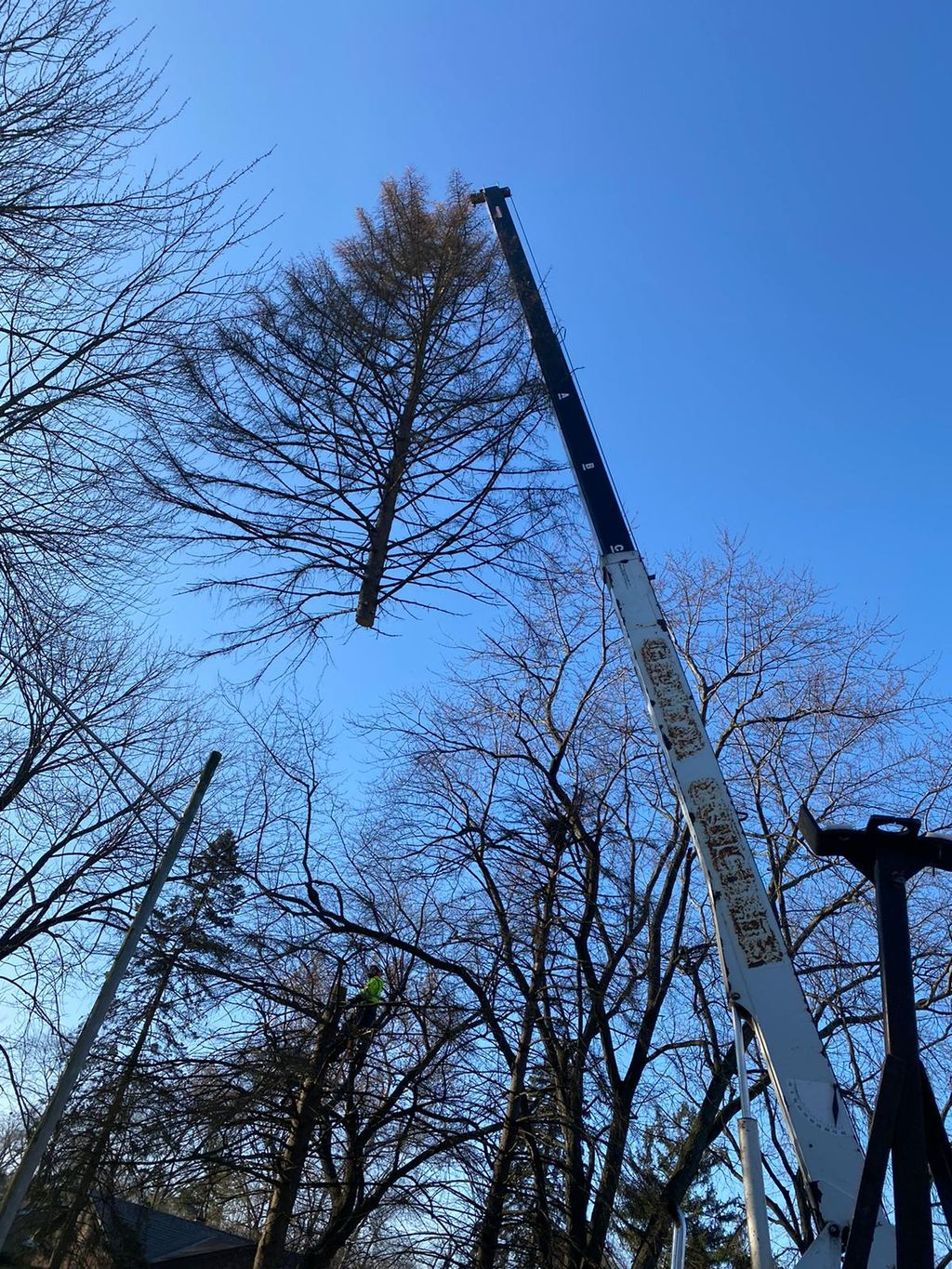 tree removal and stump removal 4 pines