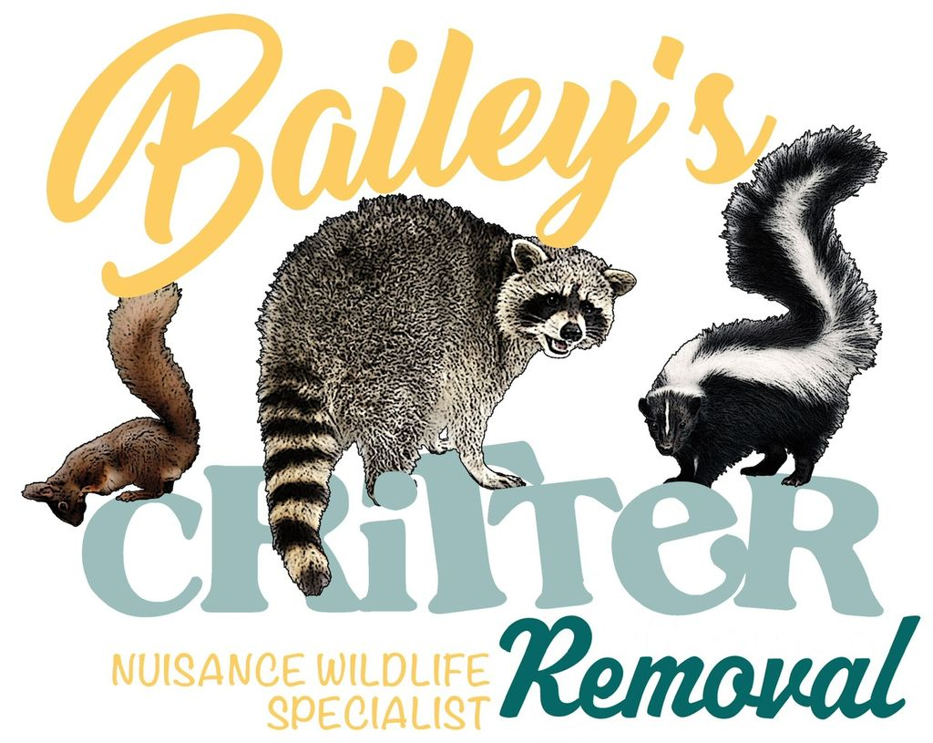 Bailey's Critter Removal