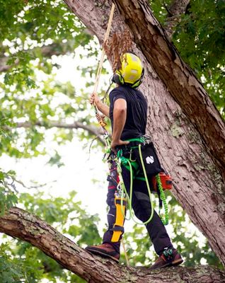 Avatar for Oscars the pros tree removel